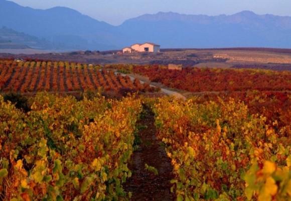 Etiquetados de Rioja nivel usuario ¿Qué es un Reserva?