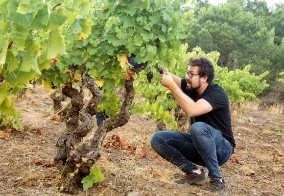 The 3Vs are here! The Top Frontonio Wines