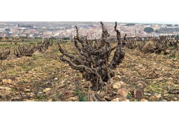 Welcome, Viña Zorzal Wines