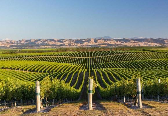 Los 10 Viñedos más espectaculares del mundo.