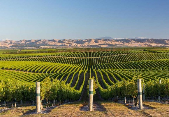 The 10 most spectacular vineyards in the world.